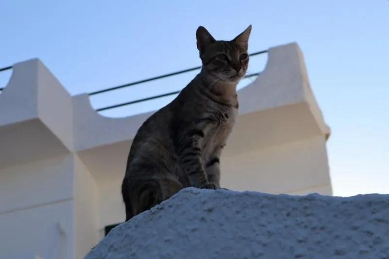 Vakantie op het eiland Agistri in Griekenland
