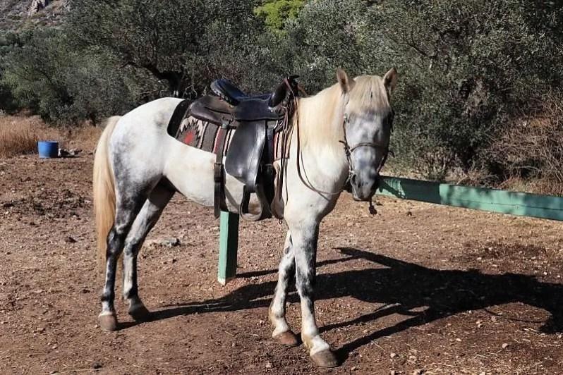 Horse Riding Aponisos op Agistri in Griekenland