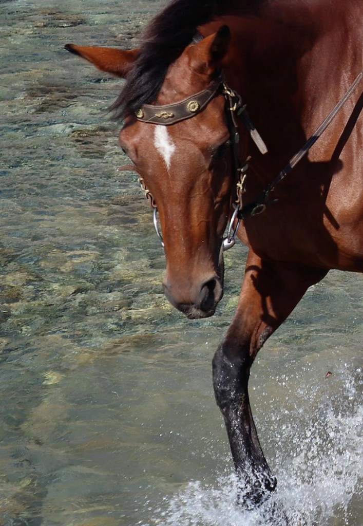 Paarden spiegelen gedrag en gevoel