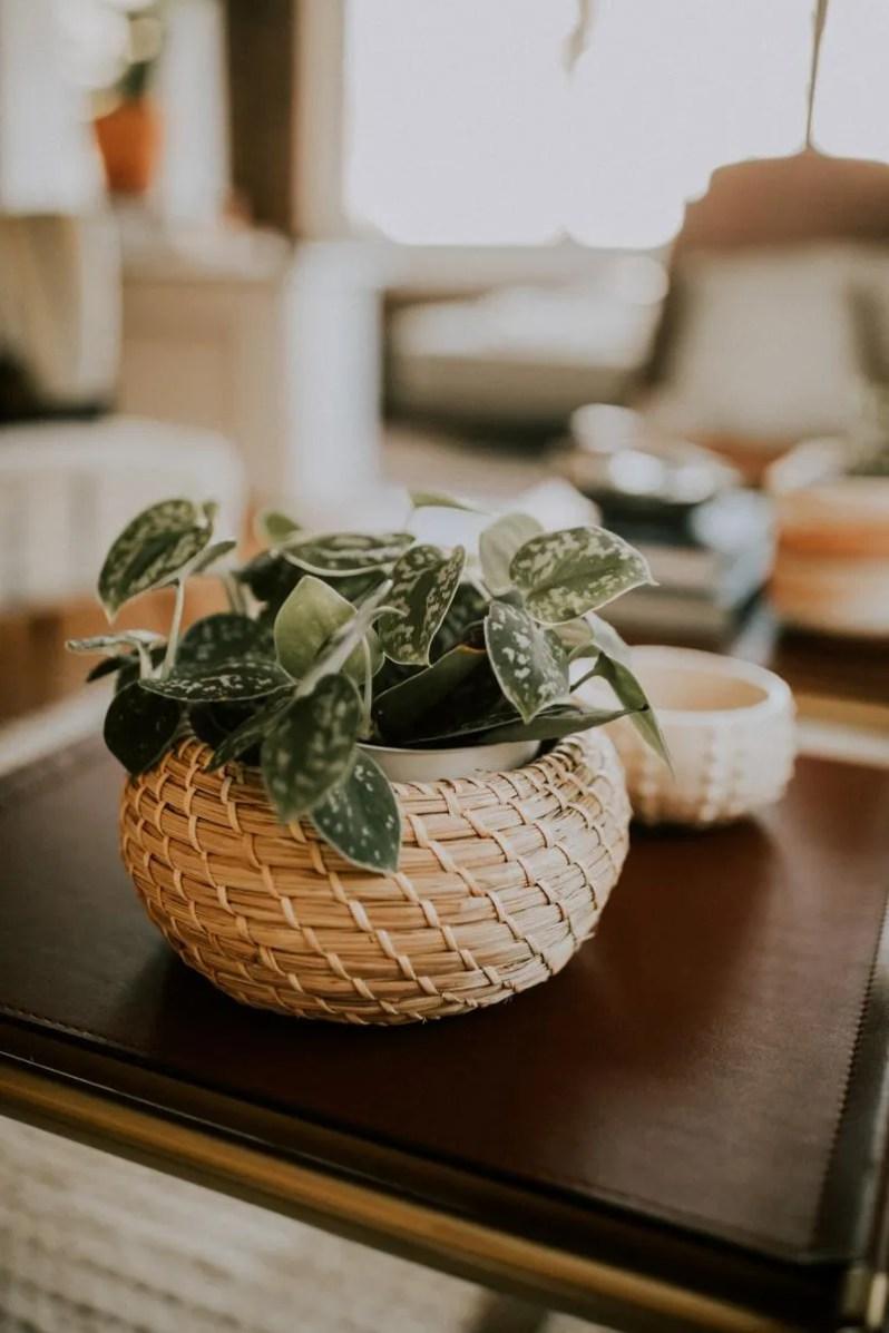 Simpele manieren om de natuur in huis te halen