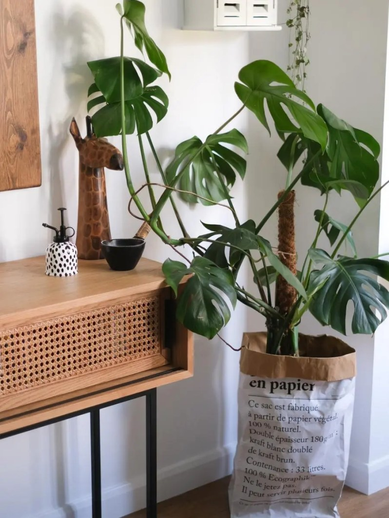 Tips voor meer bloemen en planten in je interieur