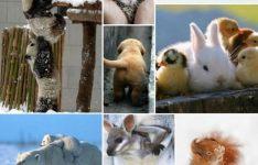 Boho Pins - Cute Animals