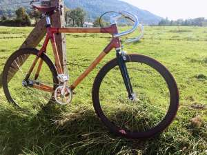single speed z bambusa pod płotem