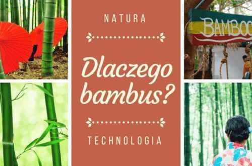 dlaczego bambus kolarz