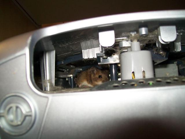 mousepc1.jpg