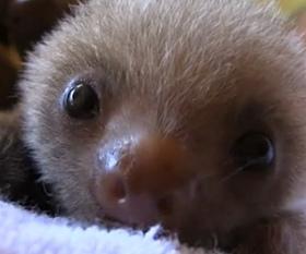 slothbb.jpg