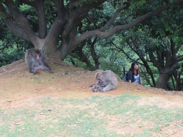 Arashiyama-Monkeys-10-1
