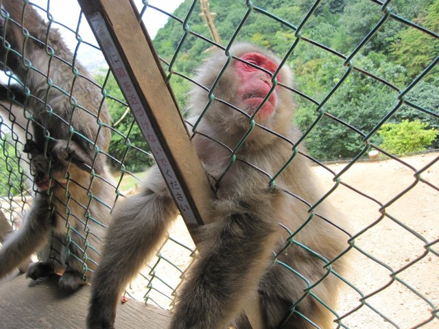 Arashiyama-Monkeys-15-1