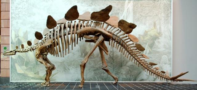 Stegosaurus_Senckenberg.jpg