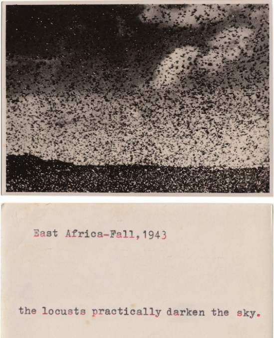 locusts-peter-549x800.jpg