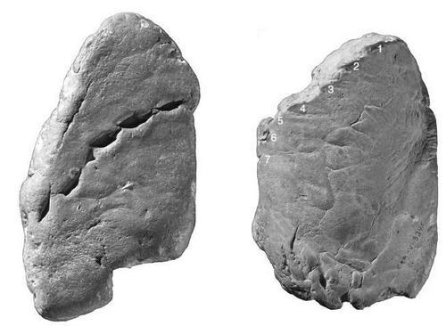 shark-bite-coprolite-2-thumb-500x366-42941.jpg