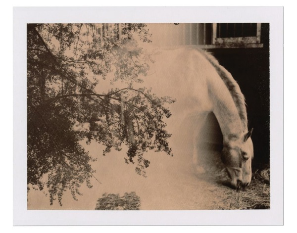 Autumndewilde-Impossibleproject 2-1