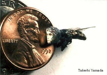 Ts1Human-Faced-Fly-With-Penny