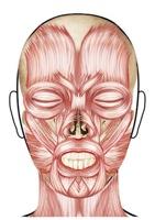 WordPress Wp-Content Images Artnatomia