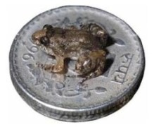 Wp-Content Uploads Frog On Coin
