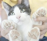Cattoes