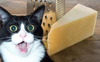 cheese_shcokerd.jpg