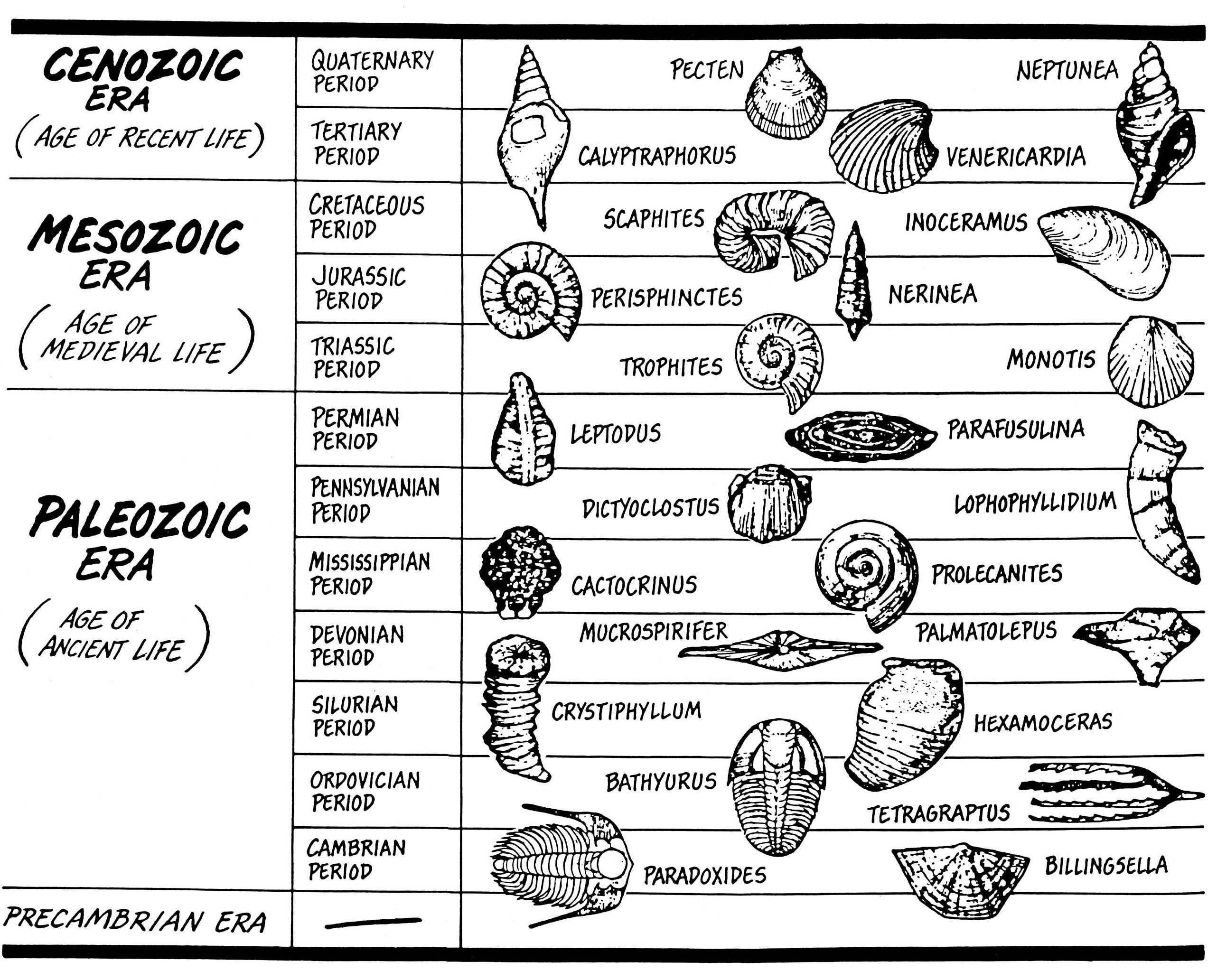 Geological Column Dating Worksheets