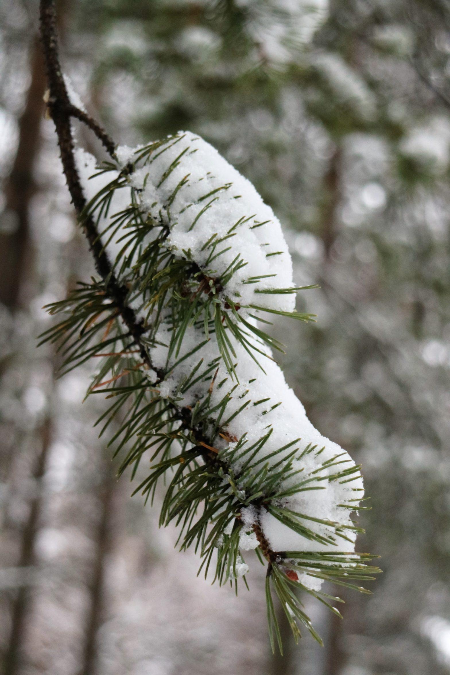 Snö i december