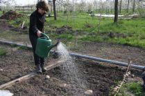Noch funktioniert das Bewässerungssystem nicht und Handarbeit ist angesagt
