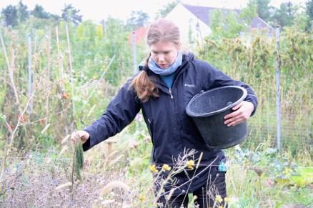 Das Sammeln der Samen ist eine Sisyphusarbeit...