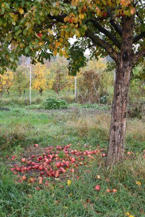 Herbststimmung im Gemeinschaftsgarten.