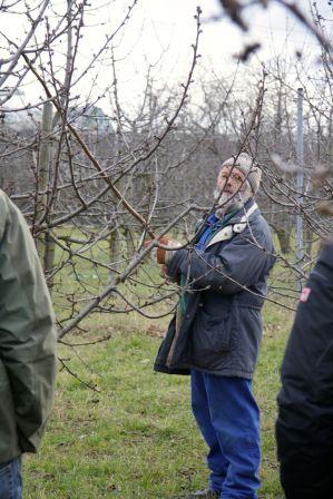 """Vermittlung des """"Baum-Schneide-Know-How"""" beim Workshop Winterschnitt an Obstbäumen."""