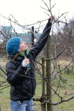 Auslichtungsschnitt um Verkahlung des inneren Baums vorzubeugen.