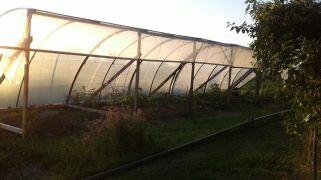 Die ersten Pflanzen sind eingezogen ...
