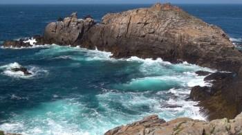 Haïscope #572 : Nids de pies de mer