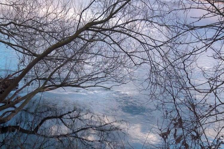 Haïku #2162 : À moitié sous l'eau