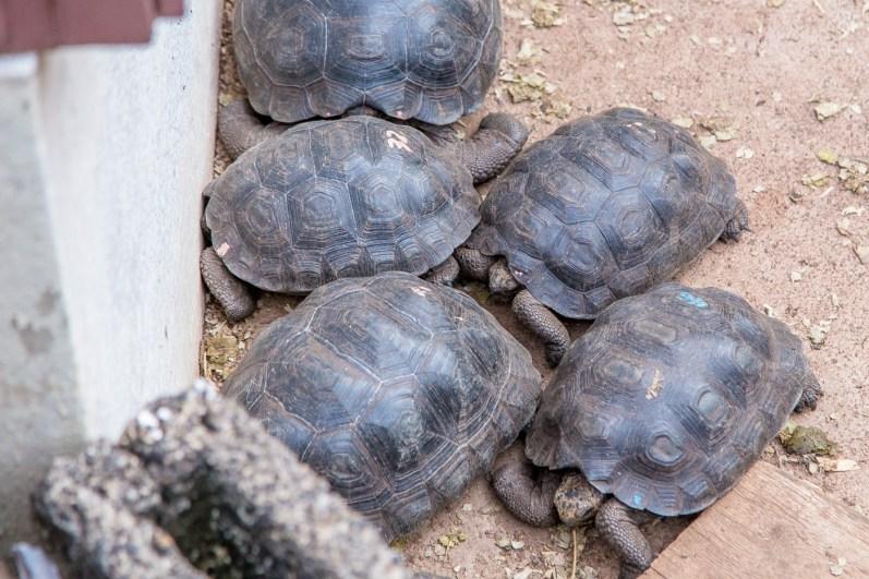 Galapagos - Tortuga Bay + Turtle Reserve (13 of 58) June 15