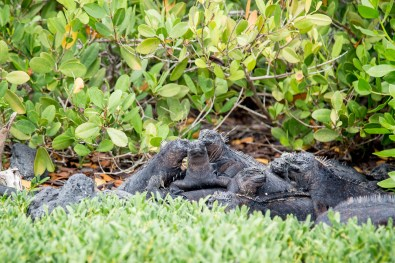 Galapagos - Tortuga Bay + Turtle Reserve (39 of 58) June 15