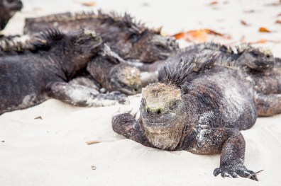 Galapagos - Tortuga Bay + Turtle Reserve (44 of 58) June 15