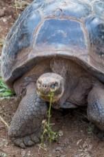 Galapagos - Tortuga Bay + Turtle Reserve (8 of 58) June 15