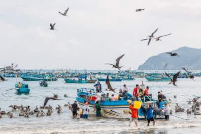 Puerto Lopez - Fish Market (14 of 40) May 15