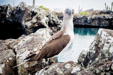 Galapagos - Los Tuneles (38 of 71) June 15