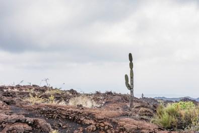 Galapagos - Sierra Negra Volcano (29 of 72) June 15