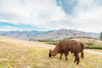 Saksaywaman Cusco Peru -41- July 2015