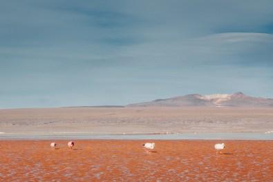 Salar de Uyuni - Bolivia -116- July 2015