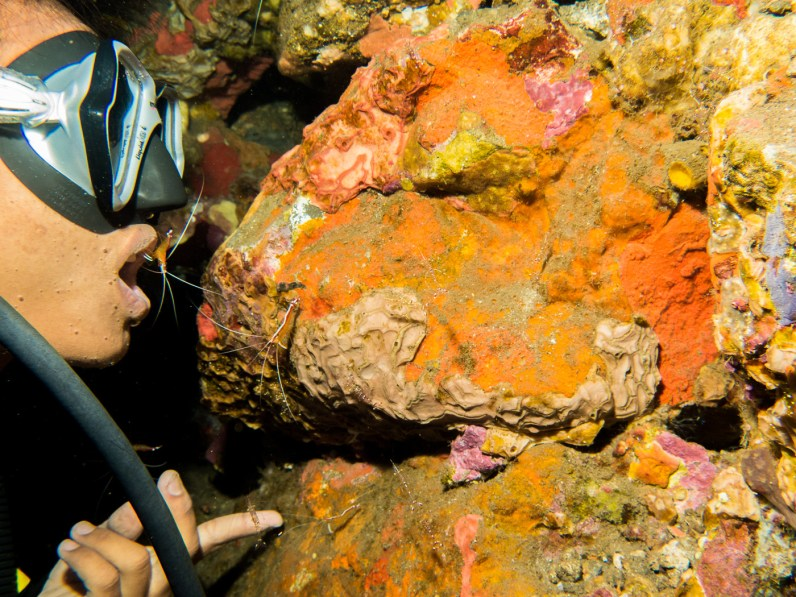 Gede put a cleaner shrimp in his mount at the Tulamben Drop-off