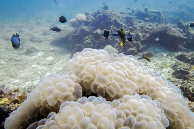 The corals of Koh Haa looked like bubbles of champagne