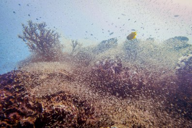 Coral reefs of Koh Haa - Koh Lanta Diving