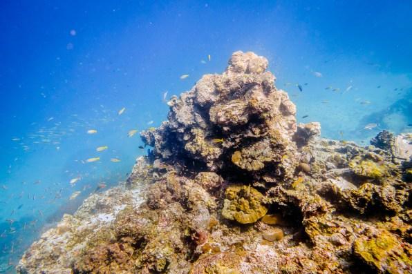 Koh Haa - Koh Lanta Diving -66