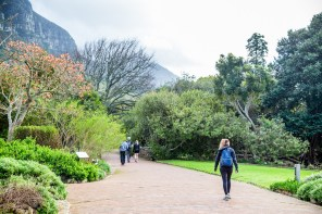 On our way to the Skeleton Gorge Trail and Smuts Track from Kirstenbosch Gardens