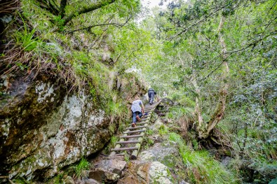 Climbing ladders of the Skeleton Gorge trail to to top of Table Mountain