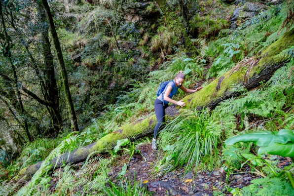 Navigating fallen trees off path of Skeleton Gorge Table Mountain