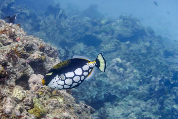 Similan Islands Live Aboard with Wicked Diving -140