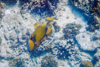 Similan Islands Live Aboard with Wicked Diving -220