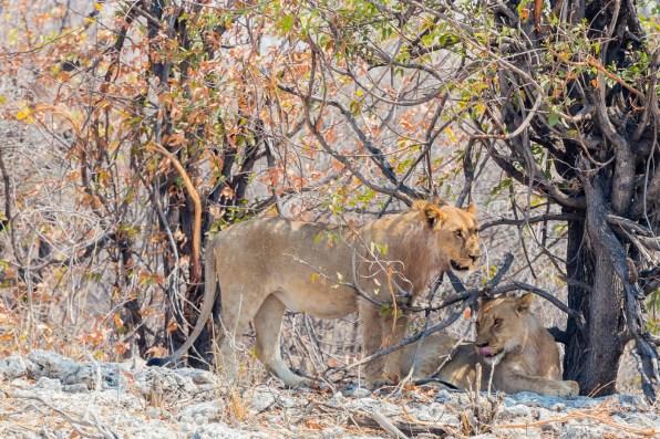 Etosha Game Reserve Self Drive Namibia -81